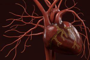 3d_renderings_of_human_circulatory_system