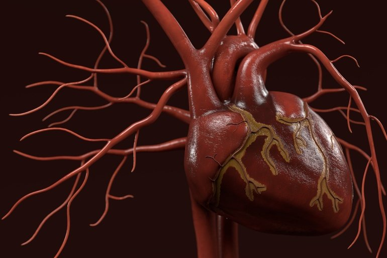 3d_renderings_of_human_circulatory_system