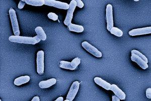 Krankheitserreger identifizieren