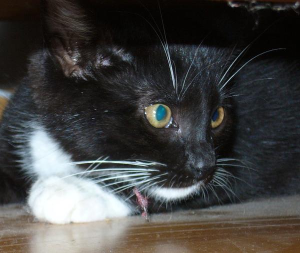 Katzenschnurrtherapie Gerät Katzenschnurren Modern Media & Technologies Galler
