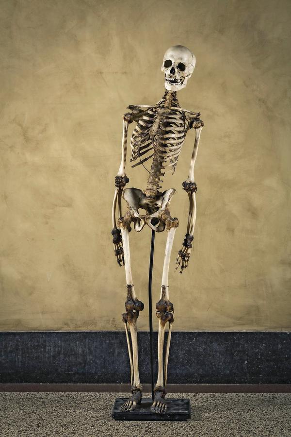 Anatomie – alles echt - medizin&technik - Ingenieurwissen für die ...