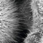 Aceton_Sensoren_Nanostruktur_AG_Funktionale_Nanomaterial_(2).jpg